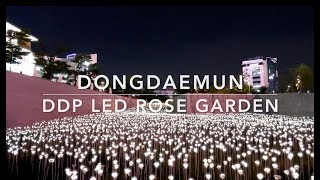 Seoul Trip 2018: DONGDAEMUN DDP LED Rose Garden