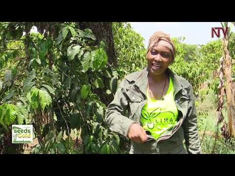 SEEDS OF GOLD: Bettina Tumuhaise - Reasons why you should choose Farming | 2019