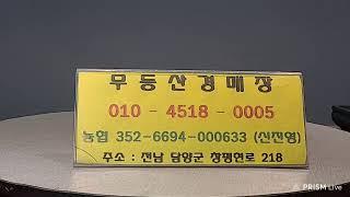 8월13일 목요일  만물 수석경매 무등산경매장 수석경매 지금 바로 시작 합니다~^^010 4518 0005