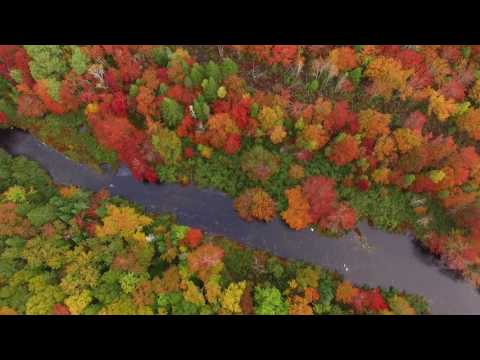 Fall leaves flight over the Sackville River, Nova Scotia