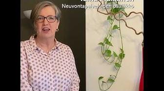Syöpäjärjestöjen valtakunnallinen neuvontapalvelu Taina Häkkinen