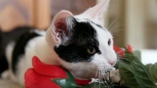 Kitties and Roses! A gift for your HEART!