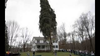 christmas tree shop danbury ct