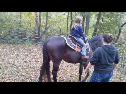 Amazing Horse for Lease $150  per month