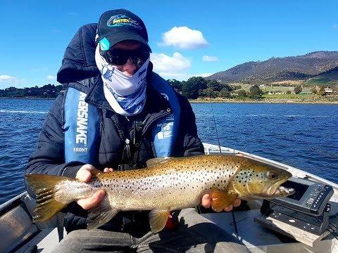 Derwent River Sea Run And Brown Trout