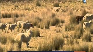 Reportage France 3 - L'accompagnement des éleveurs par la Pastorale Pyrénéenne