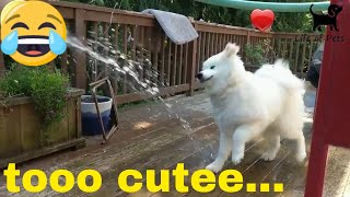 DOGS plus WATER equals Awesome 2018