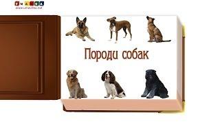 Відео для дітей від 1 року Презентація 'Породи Собак' (1)