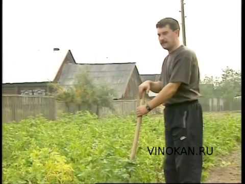 Байки Владимира Виноградова,