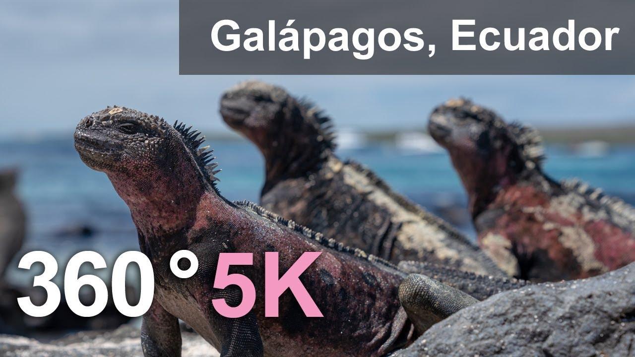 Animals of Galápagos archipelago, Ecuador. 360 video in 5K