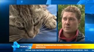 Стали известны подробности смерти кошки Матроски
