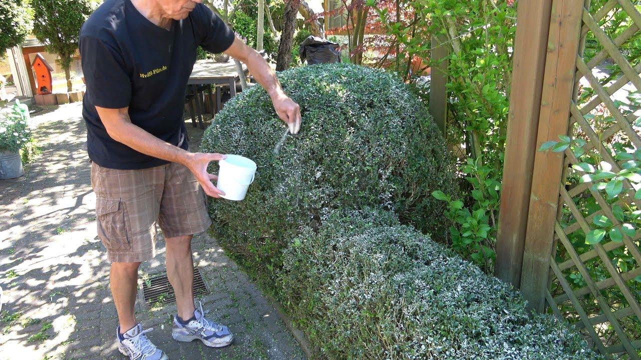 wundermittel algenkalk zur kologischen bek mpfung. Black Bedroom Furniture Sets. Home Design Ideas