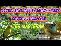Kecial Kuning Masteran Ampuh Buat Yang Macet Dan Malas Bunyi  Mp3 - Mp4 Download