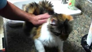 No No No Cats Compilation Funny Cute Nonono