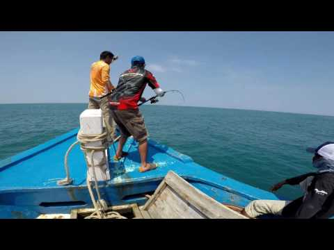 All About Fishing 5 7 Mei 2017