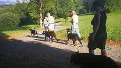 Hundecoach Hundeführerschein  Vorbereitung