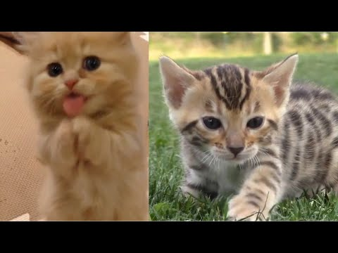 29 Cute Kitten Videos Compilation 2016