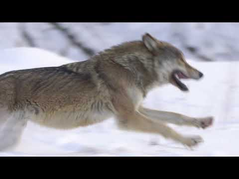 Bon Iver Teases Something is Coming