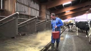 Les éleveurs ont testé #10 : la farine de paille pour assécher les logettes