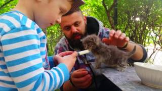 Как нужно кормить котят