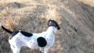 風の音が聞こえる午後 草原を眺めるポインターやラブラドール。