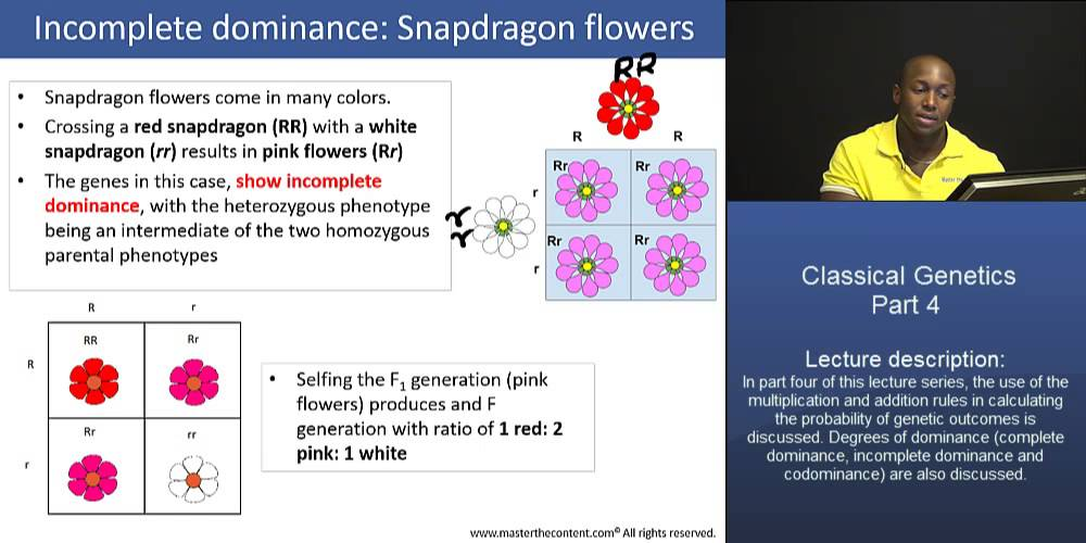 PCAT: Classical Genetics – Part 4: Incomplete Dominance (Snapdragon ...