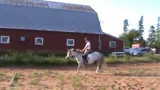 Steve - second ride of 2014 - first time over trot poles