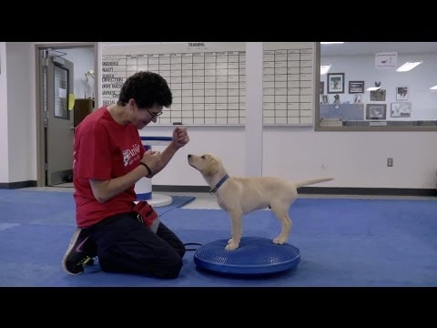 Can dogs be trained to detect the smell of cancer?