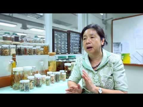 เล็กๆเปลี่ยนโลก [by Mahidol] ยาเขียว ยาขม สรรพคุณสมุนไพรไทย (1/3)