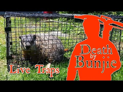 Tips On Trapping With Live Cage Traps