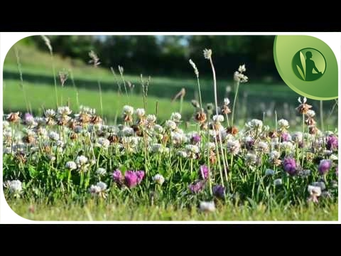 Relaxing Music for Peace, Tranquility and Well-Being with Piano Sounds to Reassure
