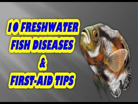 10 freshwater fish disease fish care fish treatment youtube