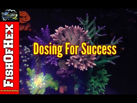 Top 5 Things People Do Wrong When Dosing Calcium & Alkalinity