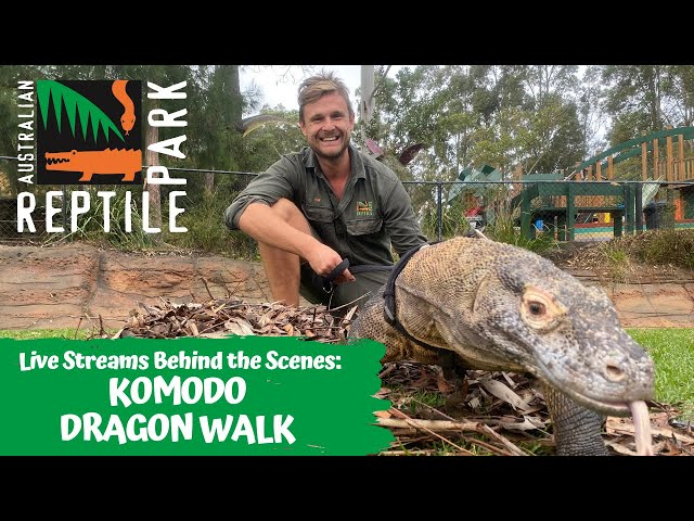 KEEPING UP WITH A KOMODO DRAGON | AUSTRALIAN REPTILE PARK