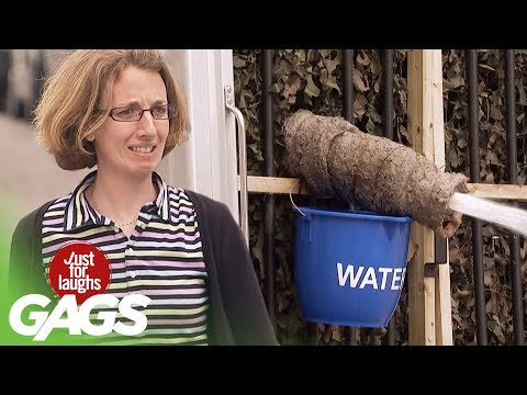 Mad Elephant Prank - Just For Laughs Gags