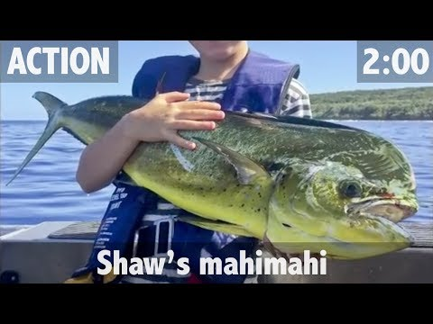 Shaw's Mahimahi