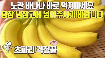 노란 바나나 바로 먹지마세요. 당장 냉장고에 넣어주세요. 초파리 걱정끝 바나나 보관방법 효능까지!