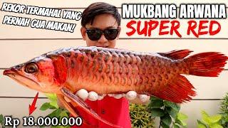 Download lagu MAKAN ARWANA SUPER RED SEHARGA MOTOR! DAGINGNYA EMPUK USUSNYA PALING ENAK.