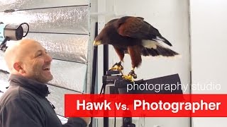 Hawk Vs. Photographer - In our new pro photography studio(Are you a keen photographer? Download my cheat sheet and transform your photography, starting today: http://vid.io/xq4t Hi All, A very Happy New Year to all ..., 2015-01-01T12:38:32.000Z)