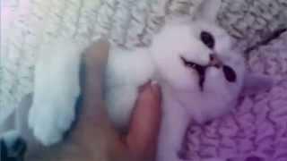 Смешные британские кошки