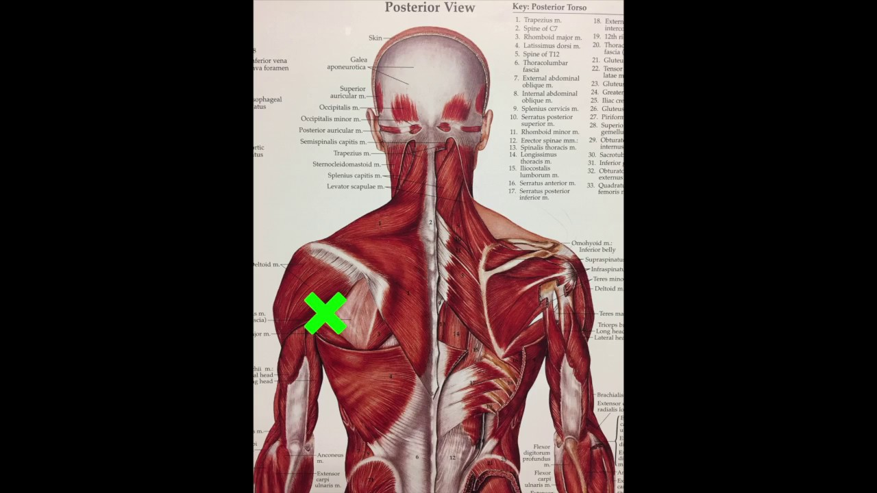 FIX YOUR SHOULDER PAIN (Posterior Cuff Active Release) - YouTube