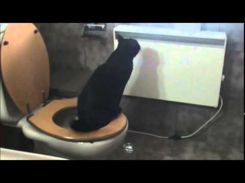 Gatto scacaccio doovi - Bagno sporco di cacca ...