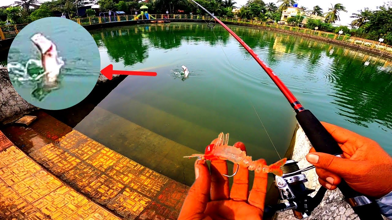 How to CATCH Fish on Artificial Shrimp ? | Testing TiCA Galant Rod and Reel