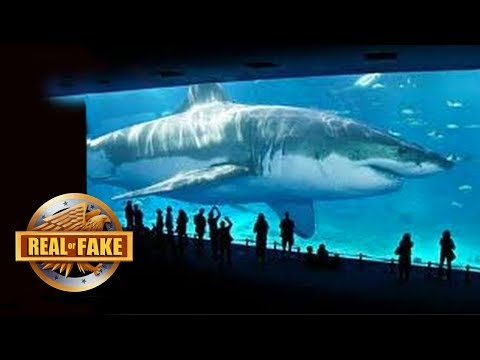Thumbnail: BILLIONAIRE BRINGS MEGALODON SPECIES BACK TO LIFE - real or fake?