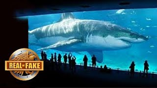 BILLIONAIRE BRINGS MEGALODON SPECIES BACK TO LIFE - real or fake? thumbnail