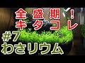 【ボトルアクアリウム】co2なしでも水草はココまで育つ!【わさリウム#7】