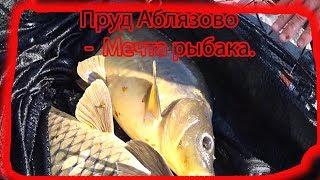 '' У Ілліча'' !!! Найкраща риболовля для всієї сім'ї !!! Скажене клювання коропа. #скажений#жоркарпа#ломаетрвет