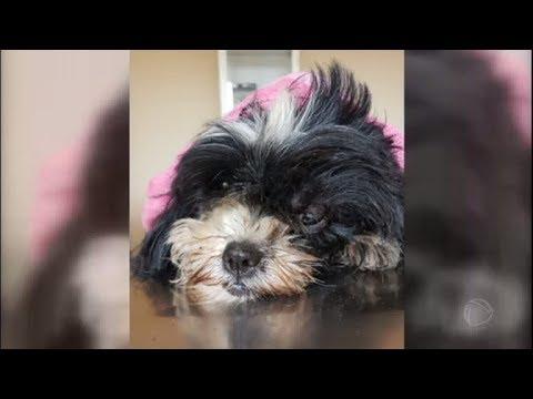 Cachorrinha é torturada e jogada na rua por ex-dona