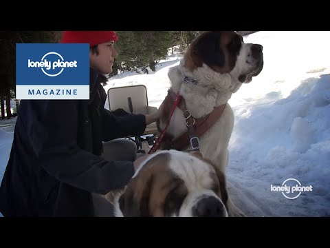 Meeting the Saint Bernards of the Swiss Alps - Lonely Planet travel videos
