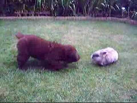 Puppy Meets Bunny Youtube